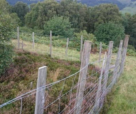 Completed fencing